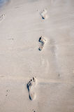 Copies de pied sur le sable humide. Photographie stock