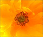 Copies jaunes de beaux-arts de papier peint de fond de fleur sauvage de rosa image stock