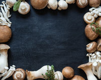 Copiez le cadre de l'espace de divers types crus de champignon sur le fond foncé Image stock
