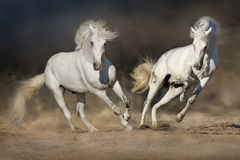 Cople horse in motion. In desert against dramatic dark background Stock Images