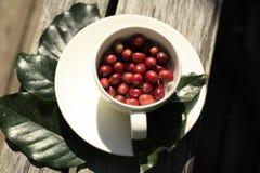 Copo de feijões de café vermelhos da goma-arábica fotos de stock