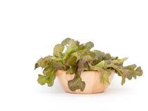 Copo de madeira do carvalho verde no fundo branco Fotografia de Stock Royalty Free
