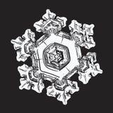 Copo de nieve aislado en fondo negro Fotos de archivo libres de regalías