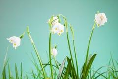 Copo de nieve de la primavera Fotografía de archivo libre de regalías