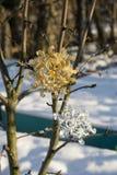 Copo de nieve del oro y de la plata en nieve foto de archivo libre de regalías