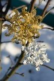 Copo de nieve del oro y de la plata en nieve fotos de archivo