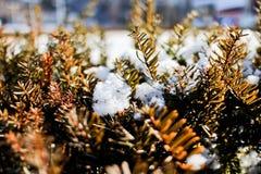 Copo de nieve en la planta Fotografía de archivo