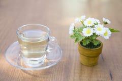 Copo de vidro do chá com a margarida no branco Imagens de Stock