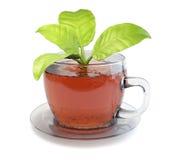 Copo do chá com folhas Fotos de Stock