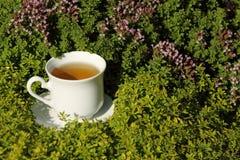 Copo do chá erval nas ervas Foto de Stock Royalty Free