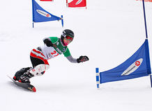 Copo do europeu do Snowboard Foto de Stock Royalty Free