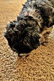 Copo do filhote de cachorro imagem de stock