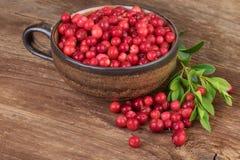 Copo do Lingonberry da airela na tabela de madeira Imagens de Stock Royalty Free
