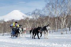 Copo do russo da competência de cão do trenó, competência de cão Beringia do trenó de Kamchatka foto de stock royalty free