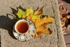 Copo dourado pequeno do chá em uns pires que estão em um banco no outono o dia ensolarado morno Imagens de Stock