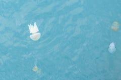Copos coloridos das medusa Foto de Stock Royalty Free