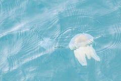 Copos coloridos das medusa Fotos de Stock