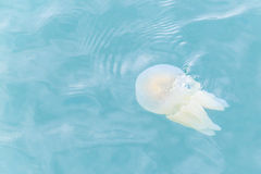 Copos das medusa Fotografia de Stock