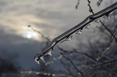 Copos de nieve blancos grandes en fondo oscuro Fotografía de archivo libre de regalías