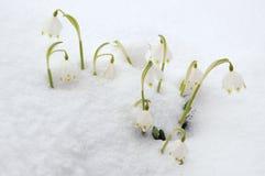 Copos de nieve del resorte en nieve Fotografía de archivo libre de regalías