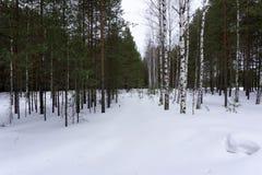 Copos de nieve de la escarcha de la postal de la perspectiva del revestimiento del paisaje del invierno Fotos de archivo