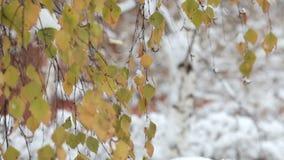 Copos de nieve que caen, nevadas Paisaje escénico del invierno Árboles y nieve metrajes