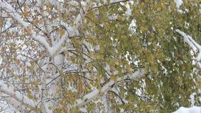 Copos de nieve que caen, nevadas Paisaje escénico del invierno Árboles y nieve almacen de video