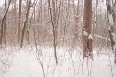 Copos de nieve que nievan contra bosque del invierno Foto de archivo