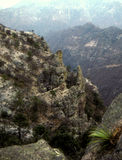 Copper Canyon Mexico. An overlook at the Copper Canyon in central Mexico Stock Photos