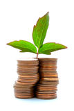 Copper Coins With Plant Growth. Crooked stack of copper coins with plant growth Stock Photos