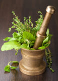 Copper mortar with herbs Stock Photography