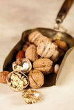Copper shovel with autumn nuts Royalty Free Stock Image