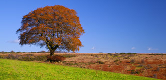 Copper Tree Royalty Free Stock Image