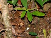 Copperhead węża Alabama przyroda Zdjęcie Stock