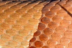Copperhead snake scales Stock Photos