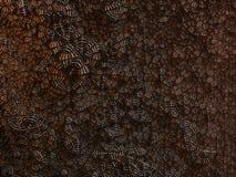 Coppery красота стоковое изображение