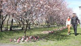 Coppia il rilassamento nei ciliegi parcheggiano al giorno soleggiato archivi video