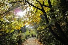Coppia la camminata su una traccia boscosa un giorno soleggiato luminoso Immagine Stock Libera da Diritti