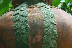 Coppia la linea con le foglie verdi sul grande barattolo dell'acqua immagini stock