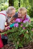 Coppia sposata che si preoccupa per i fiori immagine stock