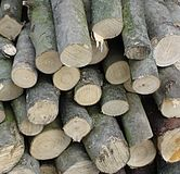 Coppice. Wood for the fire place Royalty Free Stock Photos