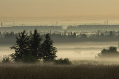 Coppice in the morning mist on the background of power lines Stock Image
