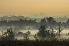 Coppice in the morning mist on the outskirts of the city Royalty Free Stock Photography
