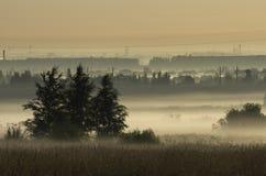 Coppice w ranek mgle na tle linie energetyczne Obraz Stock