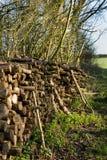 Coppiced-Holz gestapelt im Woodpile Stockfotografie