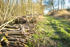 Coppiced-Holz gestapelt im Woodpile Lizenzfreie Stockfotos
