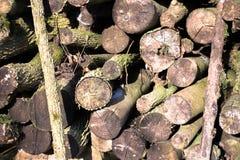 Coppicedhout in woodpile wordt gestapeld die Stock Foto