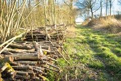 Coppicedhout in woodpile wordt gestapeld die Royalty-vrije Stock Foto's