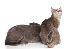 Coppie adorabili del gatto di vista posteriore con una che guarda dietro fotografia stock