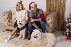Coppie alla moda dei pantaloni a vita bassa in maglioni che posano con i cani immagine stock